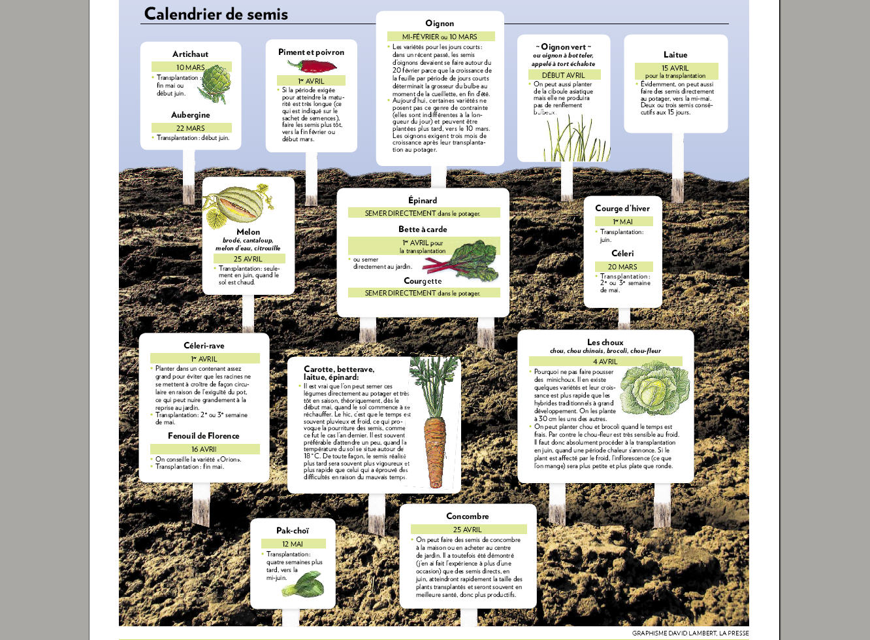 Pas de pr cipitation pierre gingras jardiner for Calendrier plantation jardin